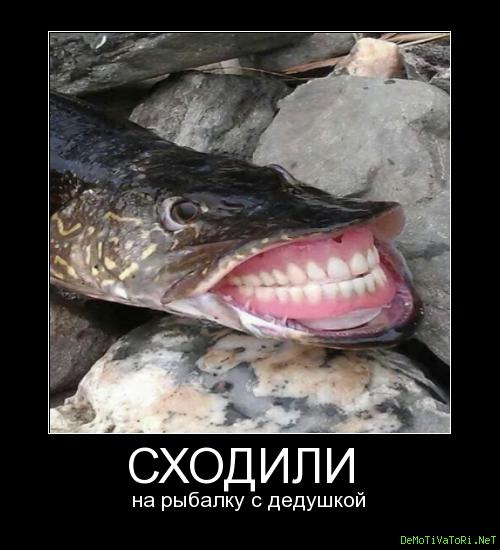 Ничего себе сходили на рыбалку