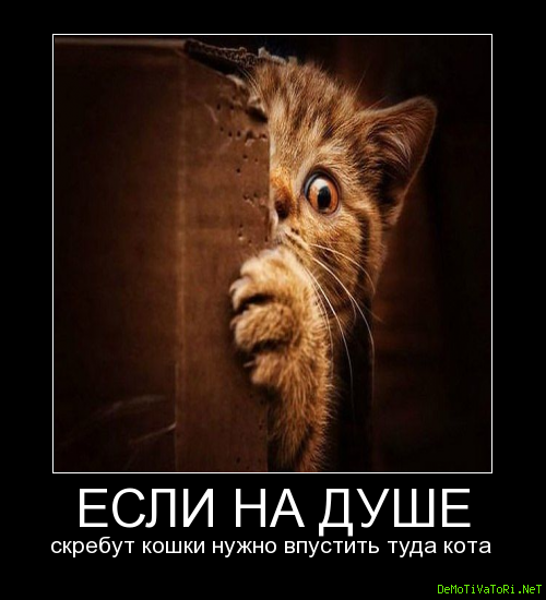 Видео голая фото кота в душі звезда шоу