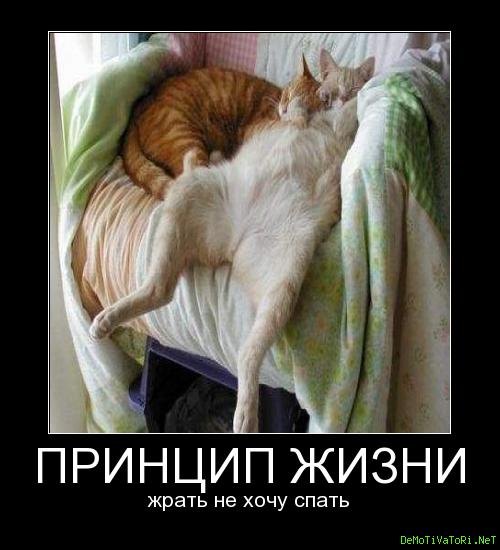 наших демотиваторы тем кто хочет спать один