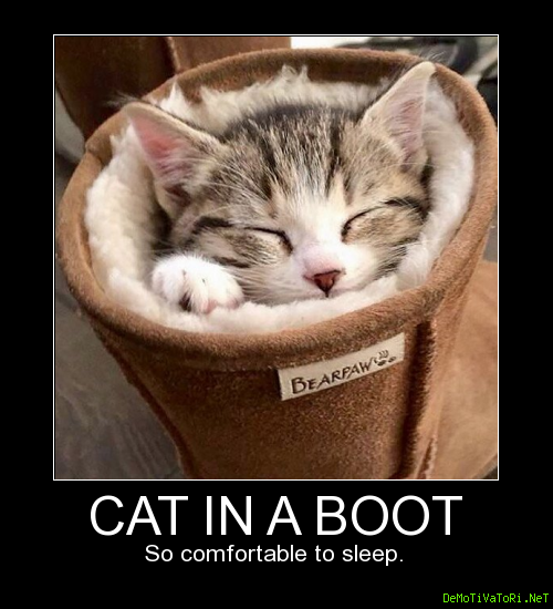 Cat in a boot. So comfortable to sleep.