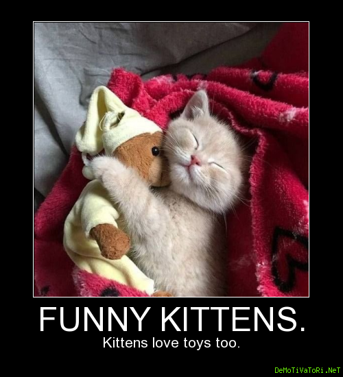 Funny kittens. Kittens love toys too.