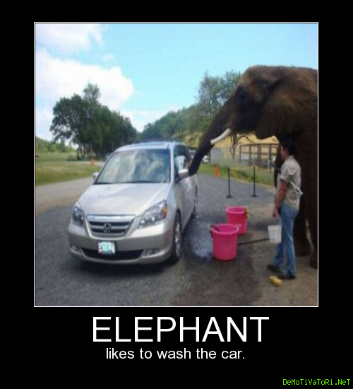 The elephant likes to wash the car.