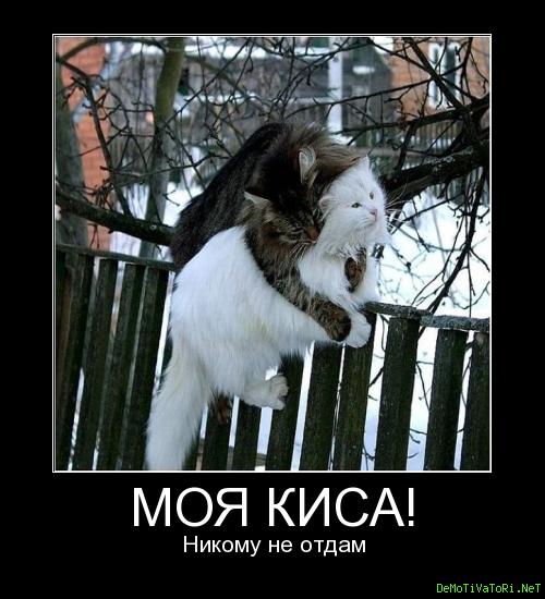 Открытка мой мишка никому не отдам