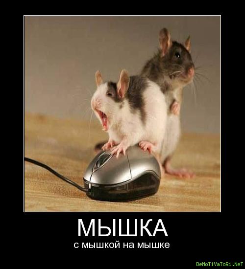 Картинки с надписью скоро буду ваша мышка