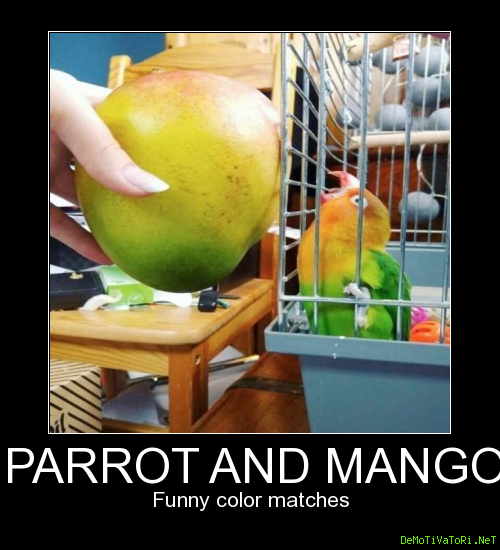 Funny color matches. Parrot and mango